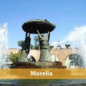 V-morelia